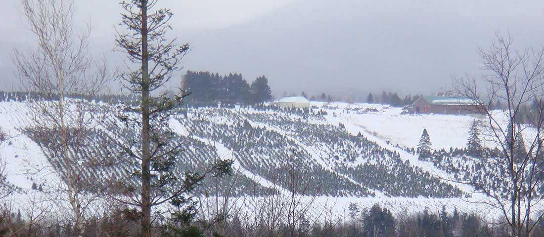 Winter tree farm